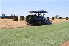 Grama Esmeralda R$ 1,70 o m² Retirada Na Fazenda Do Produtor