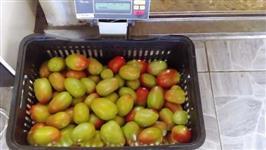 Tomates de Estufa