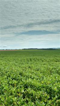 Fazenda Cultivada