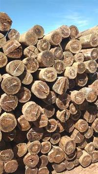 Mourões de eucalipto tratado