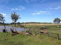 S�tios em Ant�polis - Reflorestamento e Pastagem