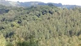 Área 70.000 ( setenta mil ) alqueires (  MATA ATLÂNTICA ) s.p.