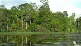 Imperdível! Fazenda no Amazonas para RL e sequestro carbono.