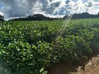 Fazenda Caldas Novas
