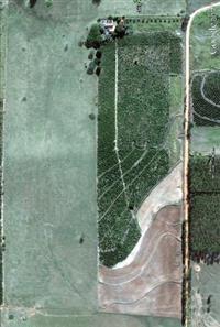 Sitio Irapuru  121.000 M2 c/ 12.000 pés de café produzindo