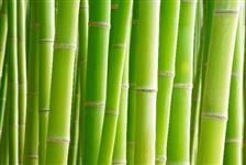 Bambu várias medidas e tamanho