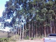 Vendo eucalipto e arrendo terras