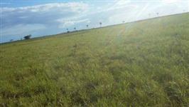 Vende-se 16.3 alqueires de terra  - 37 km Linhares - ES