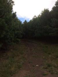Área de Pinus