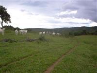 Fazenda Pronta em Coxim MS
