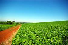 COMPRO SOJA GMO2