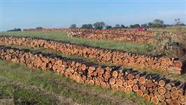 Vendo Lenha de eucalipto