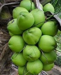 império do coco
