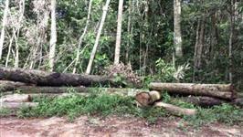 Fazenda com projeto de extração de madeira