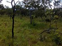 Fazenda 5.000 ha em Balsas, MA
