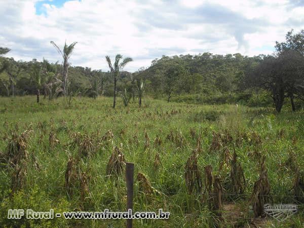 Fazenda para crédito ambiental