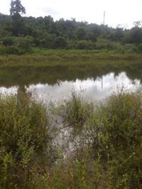 Fazenda no Pará -