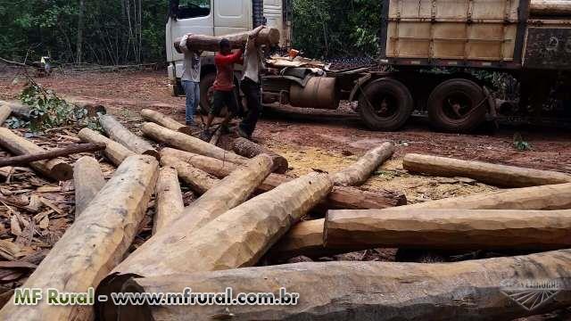 Lascas de Itauba, palanques de itauba, madeiras serradas e beneficiadas em geral