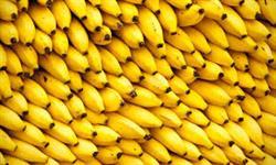 Banana Passas à granel