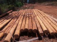 Madeira p/ construções, peças c/ diâmetros de 20 à 30, comprimentos 3 à 12 metros