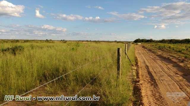 Fazenda em Jaíba - Norte de Minas