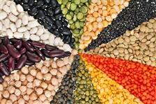Feijão e grãos