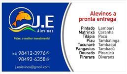 ALEVINOS DE PEIXE