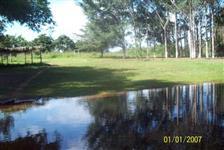 Leilão da Fazenda Pratinha em Codó-MA