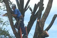 poda e corte de arvores palmeira e coqueiro remoção dos troncos e galhos