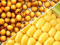 COMPRA DE SOJA GMO e NON GMO(CONVENCIONAL)