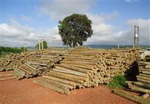 Madeiras tratadas de eucalipto - roliça e serrada