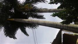 Palmeira Imperial 14 anos