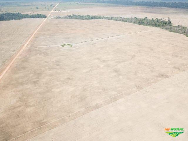Excelente fazenda - Candeiras do Jamari 1200 Hectares