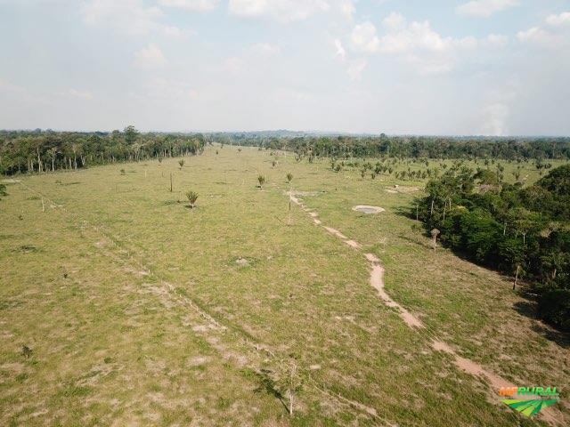 Excelente fazenda - Candeiras do Jamari 1524 Hectares