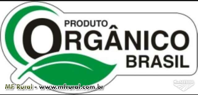 Cebola orgânica
