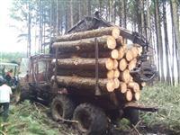 Vendo Toras De Pinus