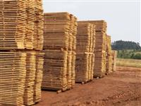 Madeira serrada de pinus, para construção civil e exportação