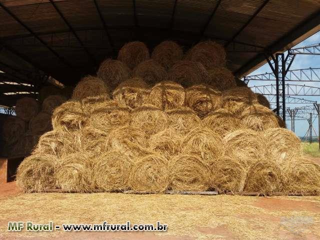 Feno em Fardo 100 - 120 kg