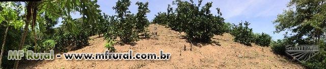 Plantação de Laranja
