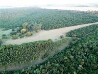 Sitio Araraquara - Linda Mata Nativa