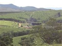 Floresta de Eucalipto Madeira