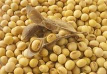 Venda Farelo de Soja 46%/Casquinha Peletizada