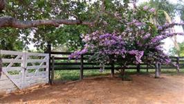 Fazenda com benfeitorias (220 hectares) - Corrente/Piauí