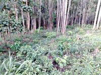 Compro terras ,fazendas sem benfeitorias somente com cadastro terra legal em qualquer lugar d brasil