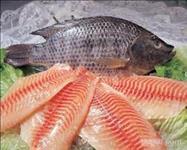 Vende-se tilápias em atacado para filé