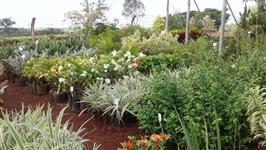Viveiro de plantas ornamentais e frutíferas