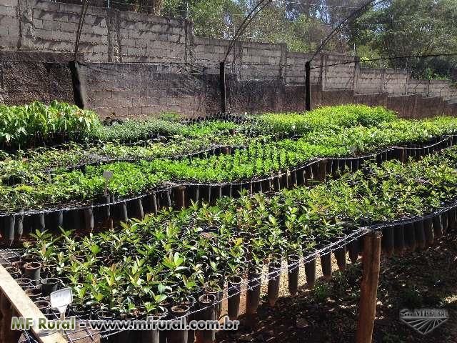 Árvores florestais, Jardinagem e Paisagismo