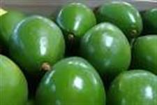 Vendo Abacate