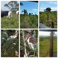 Fazenda Bom Jardim Go