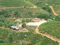 Sítio 45 ha. ocupados com café conilon/arábica em região serrana do ES
